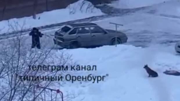 ВОренбурге полицейские установили личность мужчины, стрелявшего вбездомную собаку