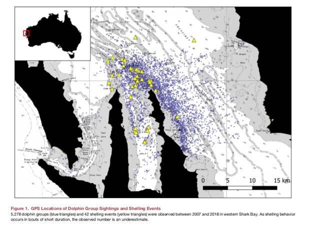 Карта залива, голубые точки - отмеченные дельфиньи группы, жёлтые треугольники - места вершевания.