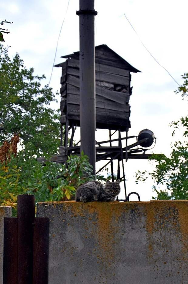 В помощь охране! город, домашние животные, забор, кот, кошка, село, улица, эстетика
