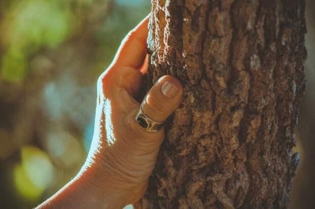 Никогда не сажайте эти деревья в своем дворе — по народным поверьям они могут навлечь беду