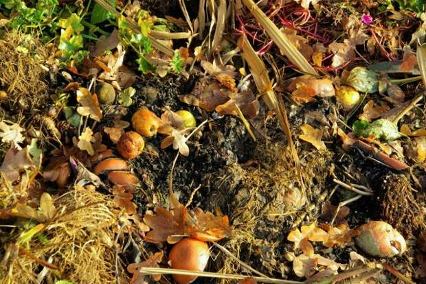 Органика для подкормки деревьев