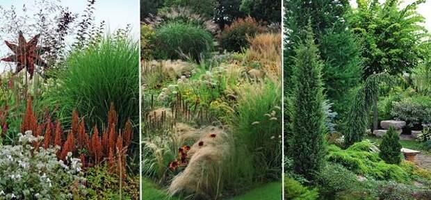 Слева: Ржавчина в саду. В центре: злаки в цветниках. Справа: надежная основа сада