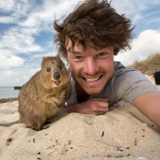 Милые и веселые фото с животными