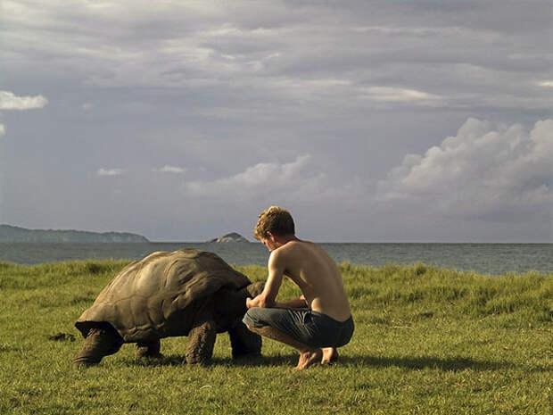 Альдабра остров черепах