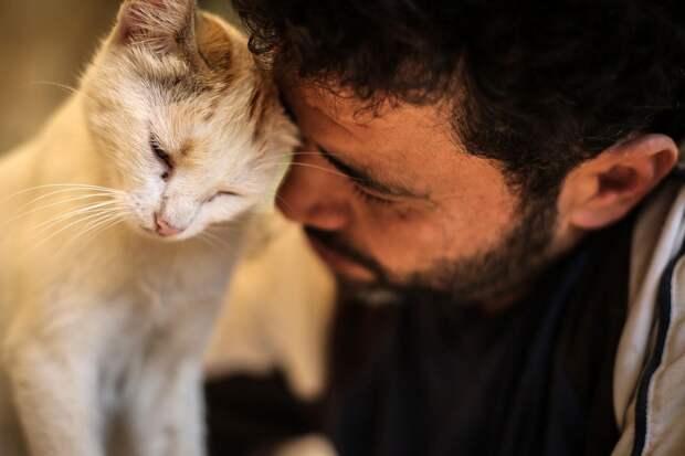Кошки реагируют на выражение глаз хозяина: новый способ общения