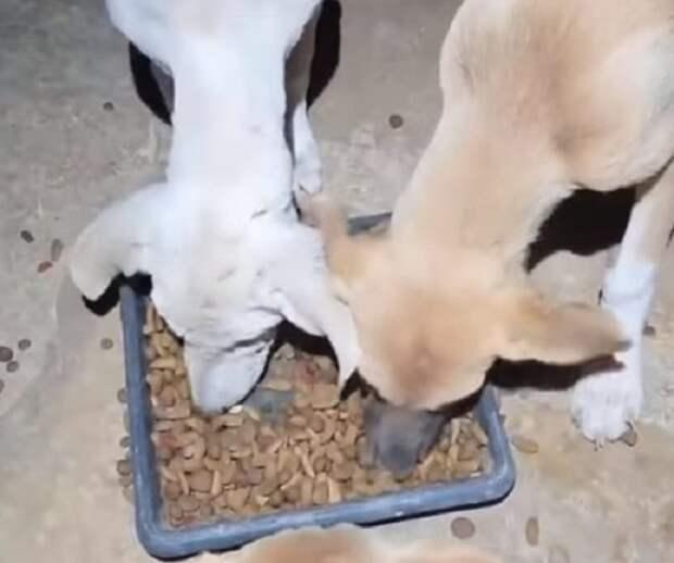 К щенкам с чесоткой боялись подойти, но добрая душа все-таки нашлась и спасла малышек