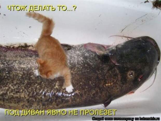 1300413796_kotomatritsa-13