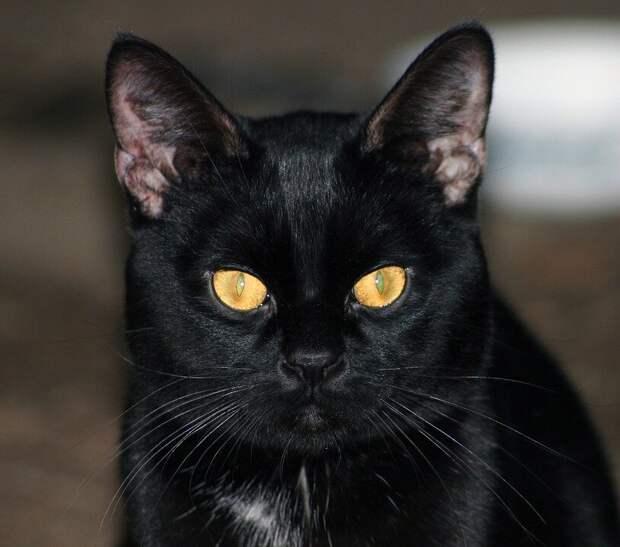 О том, что в доме появился кот, говорил лишь съеденный корм и мыши на пороге. Показаться кот соизволил только на второй месяц