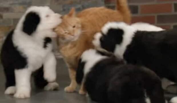Крошечные щенки сумели победить взрослых котов