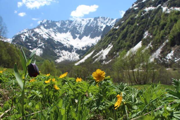 ТОП-10 самых посещаемых национальных парков и заповедников России