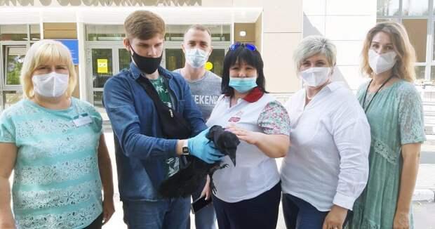 Соцработник спасла ворона от разъяренных собак в Некрасовке