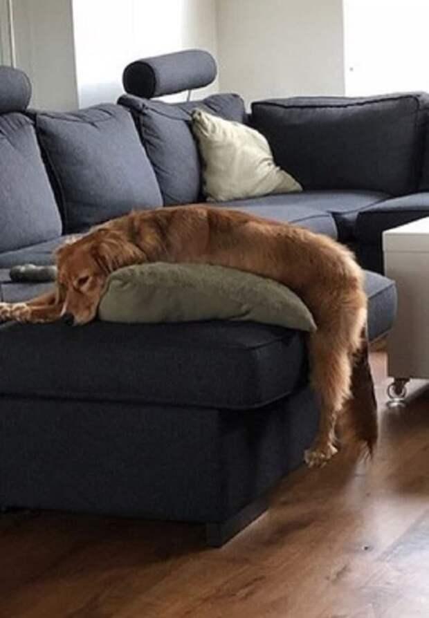 Пес на диване