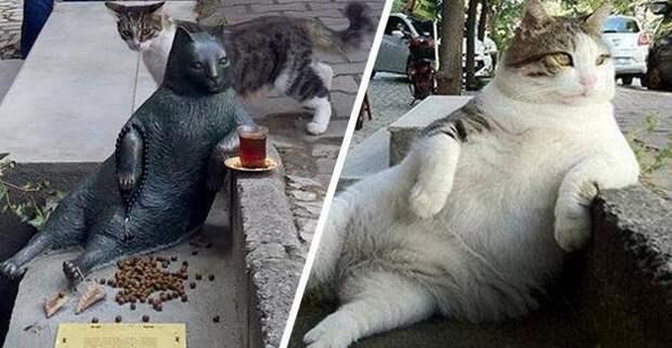 5 самых знаменитых котов животные, интересно, коты, кошки, питомцы, подборка, топ