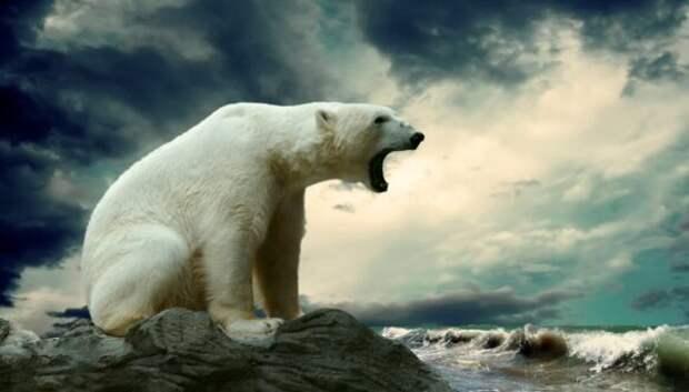 20 любопытных фактов об Антарктиде, которых вы незнали