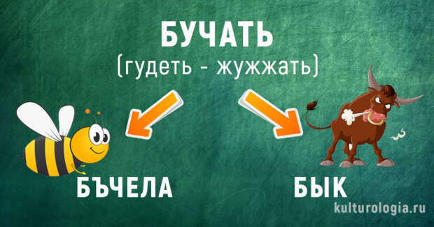 Что общего между невестой и ведьмой, быком и пчелой:  Как появились современные русские слова