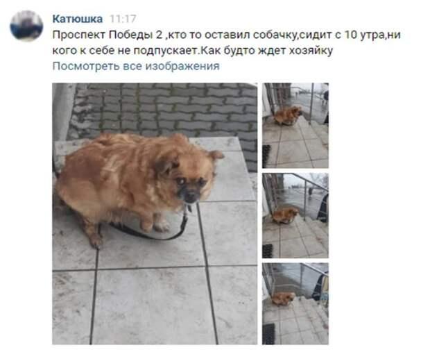 Когда хозяина не стало, родственники привязали его старенькую собачку к перилам, и ушли