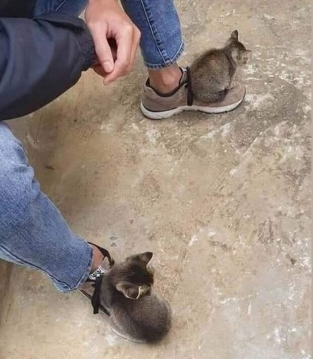 Домашние животные, которые точно знают, кто здесь главный