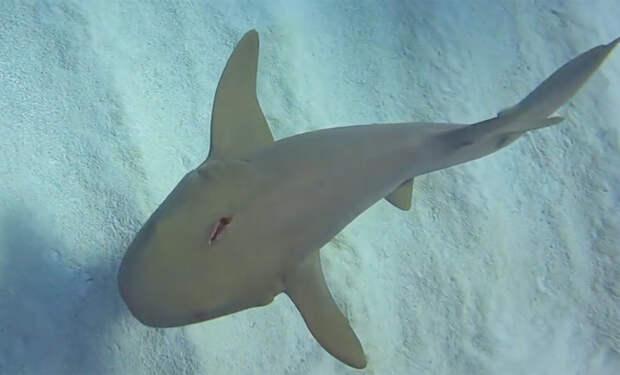 Акула с ножом в голове попросила помощи у дайвера и он решил рискнуть