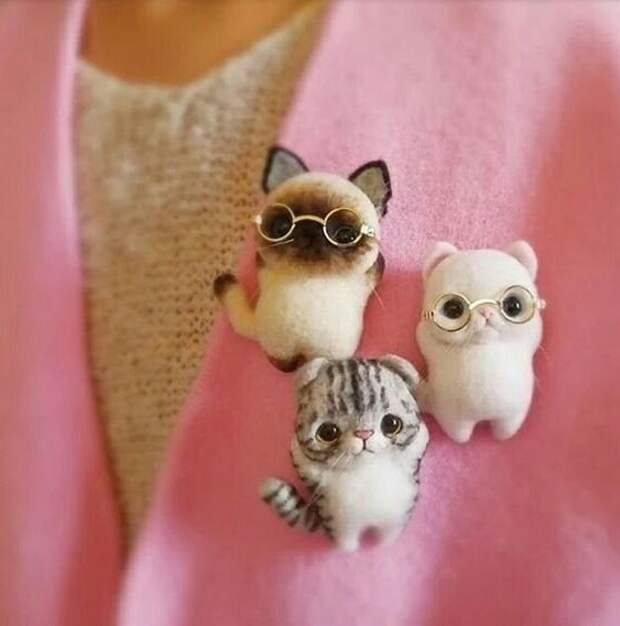 Коты очкарики