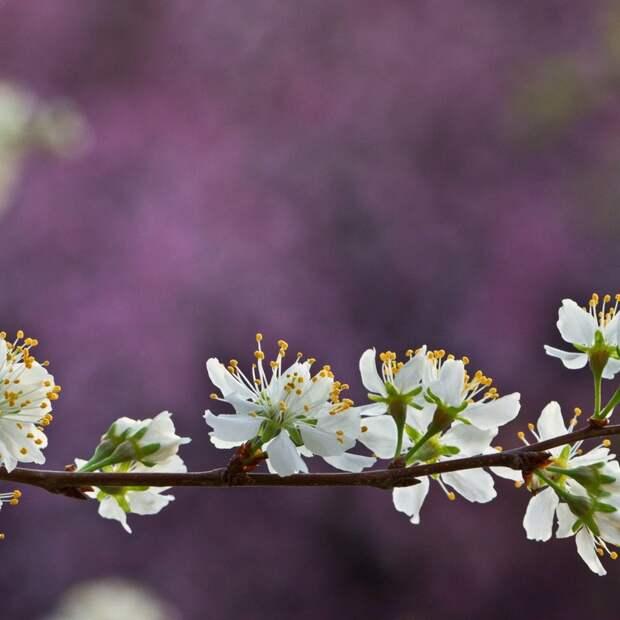 Какие изменения происходит с организмом весной