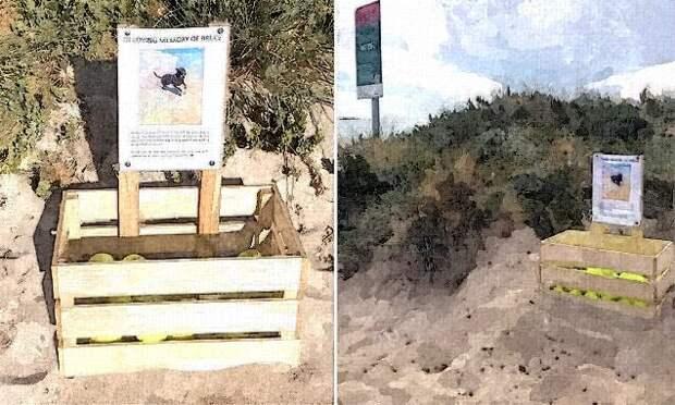 Владелица погибшей собаки соорудила необычный памятник на пляже и оставила душераздирающую записку..