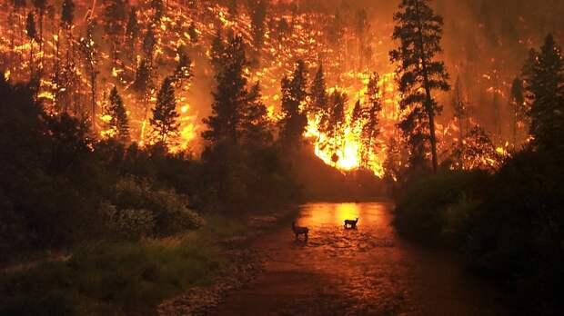 Спасатели за сутки потушили более 180 тысяч гектаров лесных пожаров в Якутии