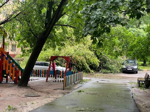 Упавшее дерево на улице Фомичёвой зацепило три машины