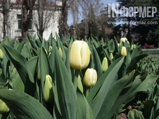 Цветущий Севастополь