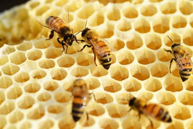 Не мёдом намазано