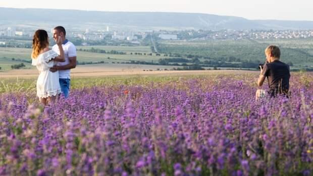 Великолепные лавандовые поля: в Крыму придумали, как обернуть подлость Украины в плюс