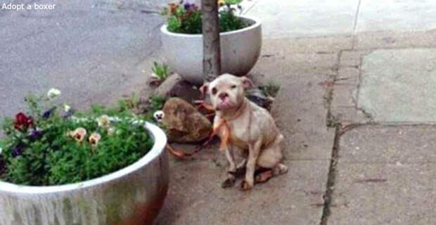 Курьер нашел собаку привязанной к дереву - и дал ее хозяину ценный урок!