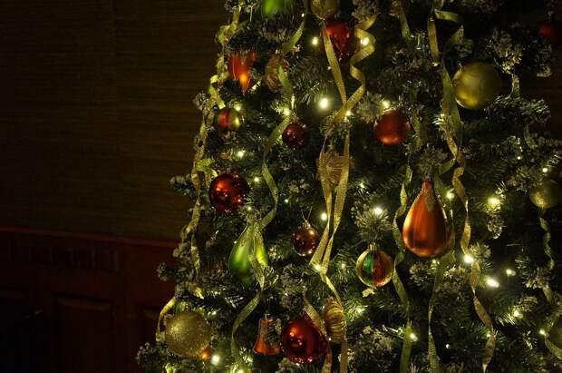 В Ижевске открылся пункт приёма новогодних ёлок