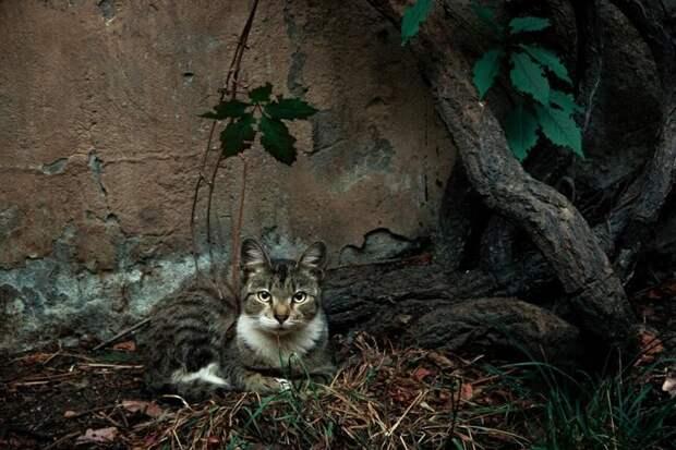 Очень колоритные уличные коты бродячая кошка, бродячие животные, городская жизнь, кот, кошка, уличная жизнь, уличная кошка, эстетика