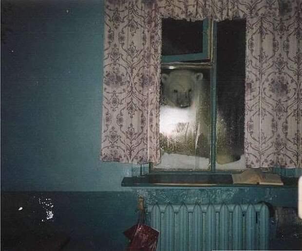 А из нашего окошка голую соседку видать немножко: необычные виды в окнах (19 фото)