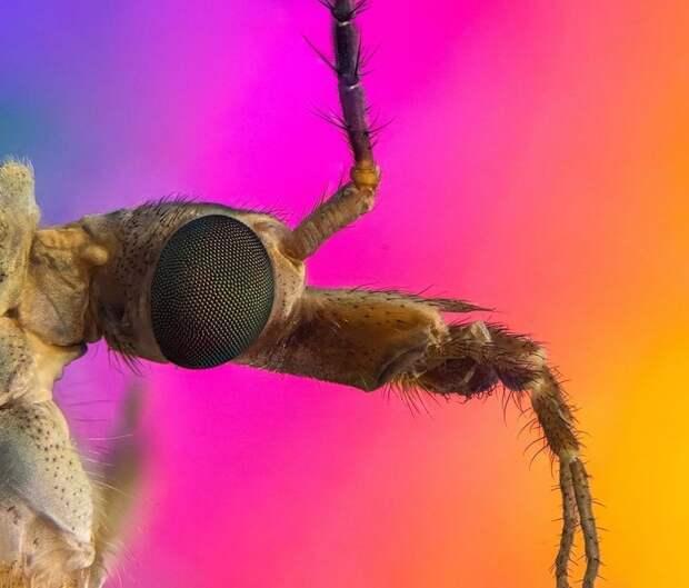 Удивительная красота микроскопических насекомых, освещенных поляризованным светом