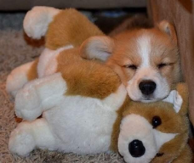 Собачка спит
