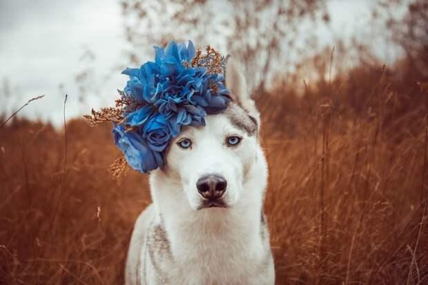12. Всё начинается с мечты жизненная позиция, жизнеутверждающие, канада, собаки, философия жизни, фото собак, фотограф, хаски