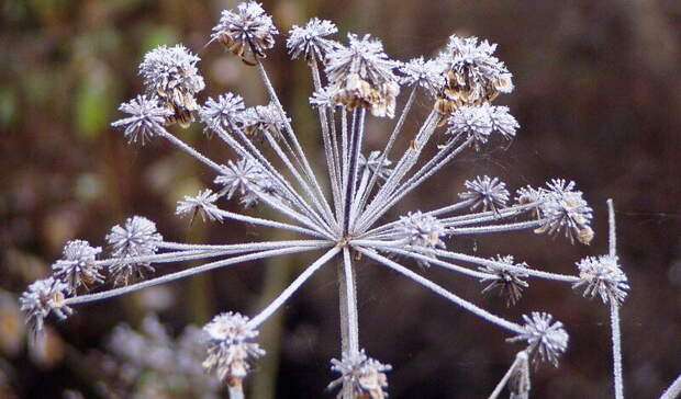 Теплая погода сменится заморозками до- 4 вНижнем Тагиле