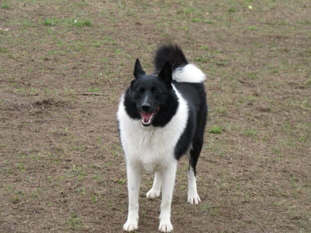 В Северном Тушине ищут хозяина потерявшейся собаки