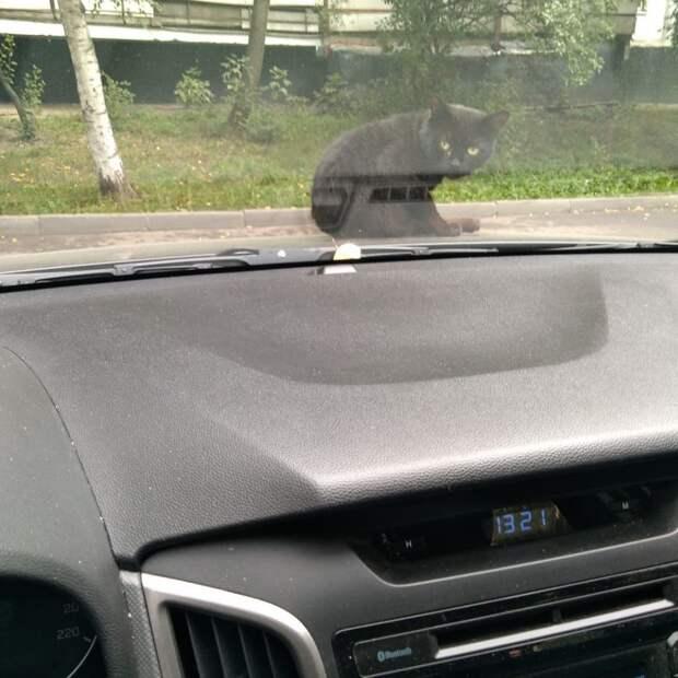 Фото дня: кот заменил сигнализацию в Лианозове
