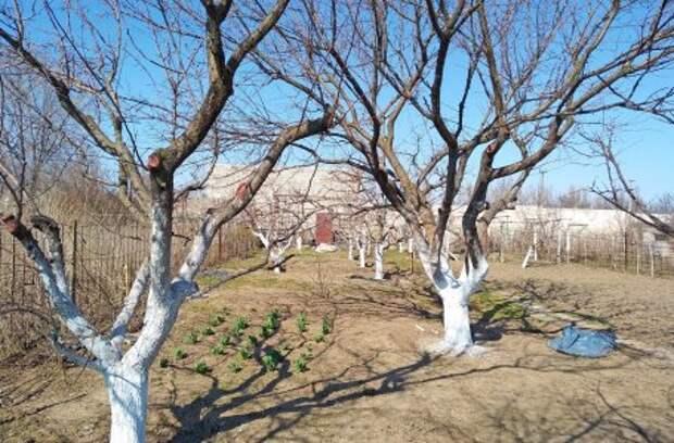 Три дела, которые надо успеть в саду до конца зимы