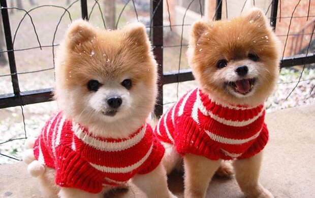Животные-близнецы - 25 очаровательных фото-11