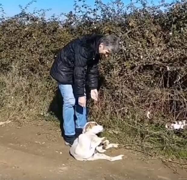 Волонтеры обнаружили в кустах щенков. И в этот момент перед ними появилась истощенная собака