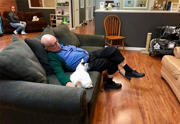 Пожилой волонтер кошачьего приюта завоевал интернет Волонтер, домашние любимцы, животнеы, забавно, кошки, приют, совместный сон, человек и кошка