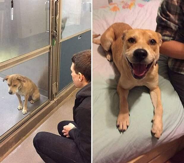 2. «Всего один день, а какая большая разница» в мире, добро, животные, забота, кошка, собака, спасение, тогда и сейчас