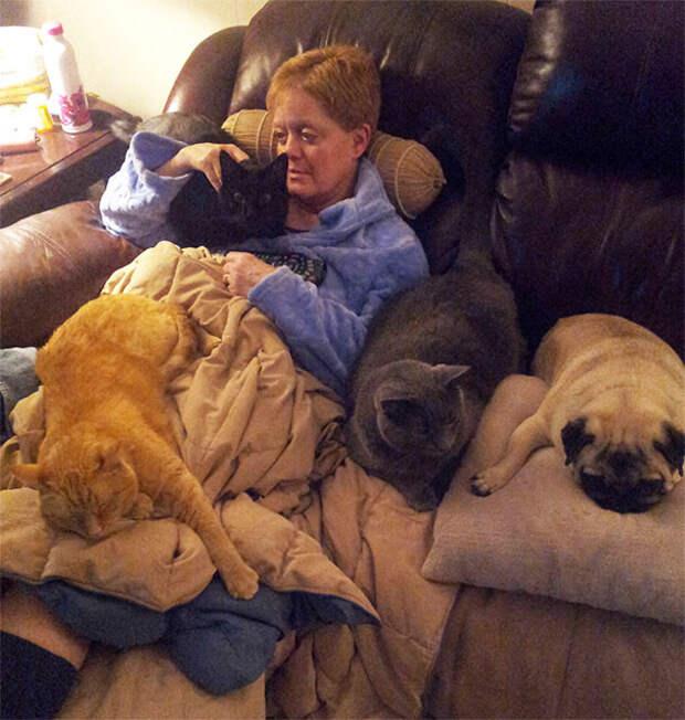 Хозяева троих и более домашних питомцев поделились своими ощущениями