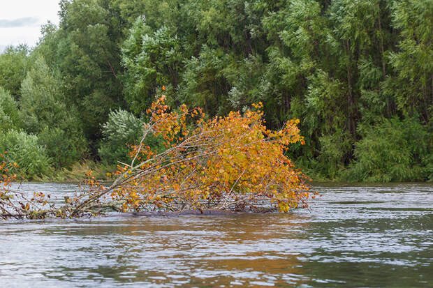 национальный парк бикин осень