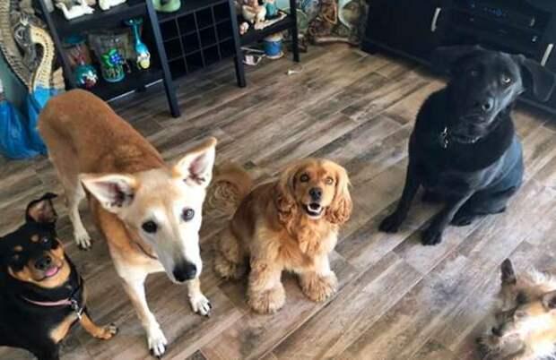четыре собаки в доме