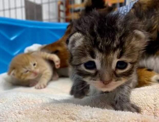 Собака стала мамой для осиротевших котят (3 фото + 1 видео)