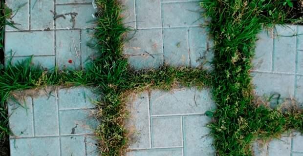 Суперметод, который избавит вас от травы на дорожках